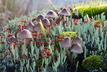 "Mushrooms, Fungi, Lichen . . . / ""Nature alone is antique and the oldest art a mushroom.""  -Thomas Carlyle / by Terri Harris"