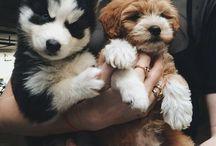 Puppy & Kitty / by Ashley Krause
