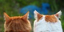 =(^x^)=  shironeko cat (= witte poes)