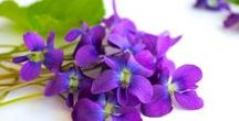 a- parfum muguet,violet,chevrefeuille&cacharel / o.a. kamperfoelie /honeysuckle/chevrefeuilles perfume (veolay = violet, pronunciation)