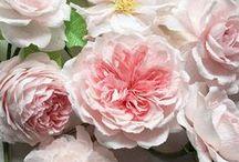 Paper Flowers, Leaves & Plants / DIY paper botanical crafts.