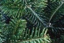 Kerstmis / Het leukste aan Kerstmis, na het feestmaal en de pakjes natuurlijk, is de... kerstdecoratie!