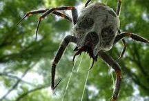Spiders & Spider Webs