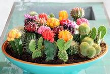BOTANICALS / potted plants, cacti, succulents and more.