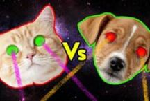 Which are the bigger jerks: Dogs or Cats? / Which are the bigger jerks: Dogs or Cats? More at: http://www.comedycentral.co.uk/cats/articles/whos-the-bigger-arsehole-cats-or-dogs