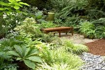 Garden Perennials / Great gardens....mixing it up! / by Michelle Forbes