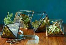 sani-terrarium