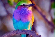Oiseaux de toutes les couleurs