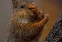 Écureuils malins