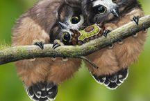 Chouettes ,hiboux ,,dans la forêt