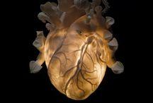 Mi corazon / by Nadine Thieme