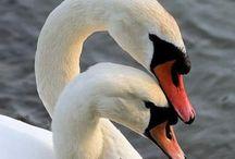 Beaux oiseaux d eau
