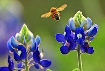 Abeilles et autres insectes