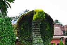 Animaux dans le jardin ext........