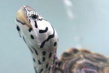 Adorable tortue et animaux jolis