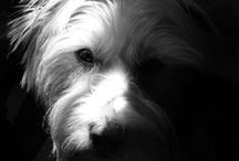 Skywire | Casper / Casper: West Highland Terrier, Skywire Mascot, Head of Strategy, Head of Security