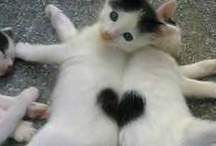 Animals I Love / by Adrienne Bloom Cinnamon