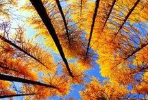 Fall in love with Fall / by Lauren Champ