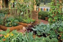 Get Outdoors & Gardening / Ideas for gardening with children and activities to get us all outside more.