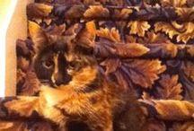 Найди Кота  +