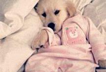 Cães Bebês / Puppies