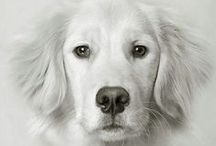 My favorit dog Tomas / about dog I want
