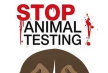 STOP KILLING ANIMALS !