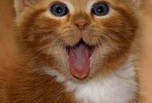 Γατάκια / Χαριτωμενα γατακια !!!!!!!! <3