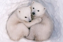 Animal Guides / Let your soul be inspired by our beautiful animal friends and wild companions!