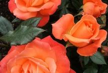 Sense of Scents-Gardening  / Gardening through the seasons