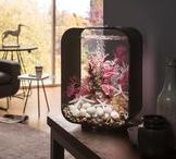 Indoor Water Features & Aquariums / Water in all its forms, made to fit at home, in your home.