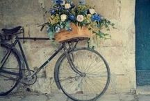 Bicicletas ~bicycles~