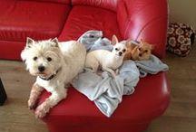 Nasza pasja - zwierzaki:) / O naszych ukochanych zwierzakach:)
