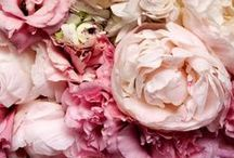 Fragrance Loves / Beautuful images of flowers, fragrances and all things scented.