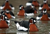Ducks, birds, & butterflies / by Donna Ming