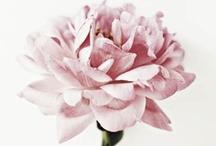 Fleurs, Flowers, etc. / Quoi de mieux pour embellir un espace? What could be better to beautify any space?