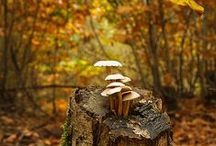 ::autumn::