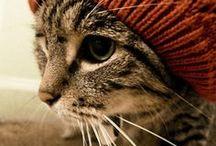 Runway Kitties / Cat Fashion for Your Feline
