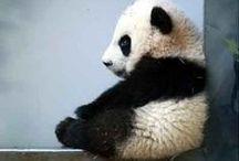 Perfectly Panda