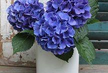 flower LOVE* / Flowers I love