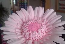 flores de azucar / by Paola Valencia