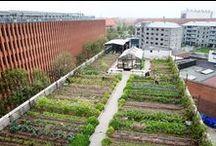 Haver i byen | Urban Garden / Selvom du bor i byen er det stadig muligt at have en lille have - måske på din altan, i et vindue eller sammen med andre i en fælleshave.