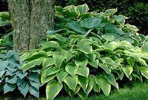 Udendørs planter | Outdoor plants / Råd og ideer om , hvad du kan plante i haven, og hvordan planterne skal passes og plejes
