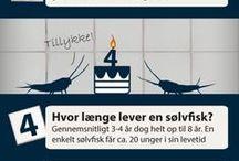 Skadedyr / gode råd om kryb og skadedyr i boligen