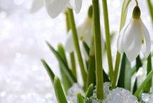 spring-wiosna