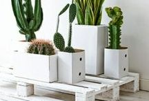 Cactus mania / On craque pour cette tendance inépuisable qui n'a de cesse de se renouveler et de nous surprendre encore et toujours.