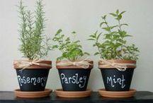 Garden :: Green Zone  / Hearb, garden, green
