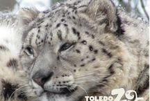 Wild, Wonderful Winter / Winter is wonderful at the Toledo Zoo!