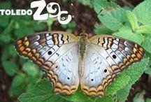 Beautiful Butterflies / Our indoor, free-flight butterfly encounter runs Jan. 17-March 2, 2014. www.toledozoo.org/butterfly