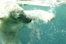 Arctic Encounter / From graceful seals to powerful polar bears, the Arctic Encounter is a great place to visit.